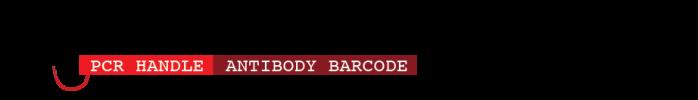 antibody_transparent